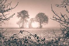 Winter is coming (Explore 16.12.17, #12) (Bilderschmied-Danz) Tags: olfen deutschland germany winter schnee snow feld field baum tree bäume trees silhouette rahmen frame bilderschmied fog landscape monochrome