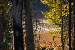 DSC_9253 (Schnauzergal) Tags: fallcolors fallfoliage naturebynikon nature trees california nikon landscape
