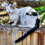 Boquiabierta #gatos #gatoscallejeros #cats #photocats #instacats #neko #meow #gatze #gatto #koshka #catsofworld #catsofinstagram #streetcats #chat #gatsdelcarrer thumbnail