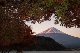 Pink Fuji in Autumn1