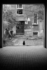Welcome (par0tia) Tags: cat kraków krakow cracow portal darkness kitty czarnykot czarny kot bw blackandwhite street photography streetlife minimalism frame krk poland polska nikon d5100