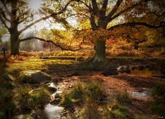 Golden! (Nina_Ali) Tags: atmospheric nature 7dwf bradgatepark leicestershire autumn sun fall sunflare november2017 backlit yourbestshot2017