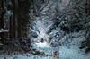 In the snowy forest (Rita Eberle-Wessner) Tags: forest wald winterwald schnee snow baum bäume tree trees white man mann dog hund walkthedog waldweg forestpath snowy verschneit schneefall odenwald winter