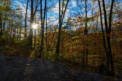 Sunstar (AncasterZ) Tags: fall fallcolor king'sforest redhilltrail sunlight sunburst sunstar