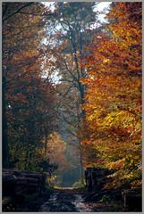 DSC_1876 (FMAG) Tags: 2017 żabieniec zalesie jesien autumn