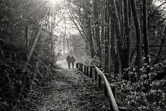 On the path to somewhere (2)... (zapperthesnapper) Tags: silverdale countryside scenary woodland walking winter trees sonyimages sony landscape sonya200 lancashire