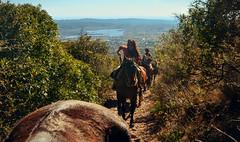 ARREANDO LOS CABALLOS (Juan Montiel) Tags: horse caballos travel turismo arriero argentina sky landscape