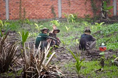 Three Happy Men Taking a Fluid Break (Ginger H Robinson) Tags: three happy transcendent men hat fluid break sandisland mekong river delta bentre province southern vietnam southeast asia rain mud puddle plant tropical