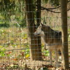 IMG_1214 (goaniwhere) Tags: wolf animal wolves wildanimal sanctuary