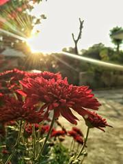 #followme #sunset #newestmember #photography (kartiksaini1) Tags: followme sunset photography newestmember
