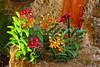 Orchids 05 (MoyanSpirit) Tags: hungary budapest exhibition fair museum citypark autumn orchid flower colourful colours flora plant nature