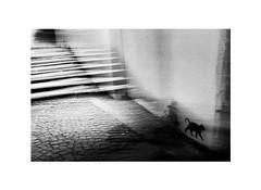 noir (Marek Pupák) Tags: slovakia blackandwhite bw monochrome streetphoto streetphotography night light fujifilm digital x100t fujix100t documentary blackcat cat streetart