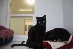 Leo - 9 month old neutered male