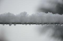 Esimene lumi (anuwintschalek) Tags: nikond7000 d7k 18140vr austria niederösterreich wienerneustadt talv winter november 2017 hommik morgen morning schnee snow esimenelumi lumi valge white weiss lörts schneeregen märg wet nass aed garden garten home pesunöör washingline wäscheleine