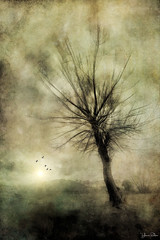 i'm alive . . . (YvonneRaulston) Tags: surreal australia corryong vic atmospheric art tree birds sun sunset creativeartphotography colour dream dusk emotive texture peaceful fineartgrunge soft glow gold green light moody moments sony photoshopartistry sundaylights landscape