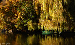 Golden Slumbers (Row 17) Tags: england shropshire shrewsbury severnvalley riversevern trees riverside rivers river waterway waterways boats boat urban autumn