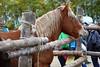 IMG_4592 (2) (MARIA ROSA FERRE) Tags: fira del cavall de puigcerdà 2017