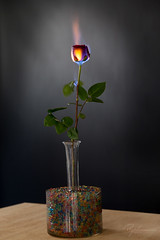 """Burning Flower 8 • <a style=""""font-size:0.8em;"""" href=""""http://www.flickr.com/photos/56830416@N05/38112104544/"""" target=""""_blank"""">View on Flickr</a>"""
