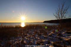 Sunny winter (Håkan Svanqvist) Tags: sunset tree grass landscape field sea water snow sky sun forest wood nature fjord oslo bay oslofjord norway jeløy moss alby canon eos70d efs1018mm
