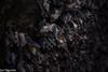 Cave full of Fruit Bats (Rousettus amplexicaudatus) (Jari Cornelis) Tags: jari cornelis canon 700d wild wildlife nature fruit bats cave natgeo ngc mammals ausgeo bali indonesia
