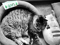 """You can make more friends in two months by becoming interested in other people than you can in two years by trying to get other people interested in you."" ―Dale Carnegie 🐈 (anokarina) Tags: appleiphone5s sign kitty animal plush stuffed toy pusheen liveanimals pnw pacificnorthwest seattle washington wa southdelridge colorsplash"