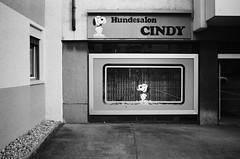 ...for sad dogs (gato-gato-gato) Tags: 35mm asph ch iso400 ilford ls600 leica leicamp leicasummiluxm35mmf14 leicasummiluxm35mmf14asph mp messsucher noritsu noritsuls600 schweiz strasse street streetphotographer streetphotography streettogs suisse summilux svizzera switzerland wetzlar zueri zuerich zurigo z¸rich analog analogphotography aspherical believeinfilm black classic film filmisnotdead filmphotography flickr gatogatogato gatogatogatoch homedeveloped manual mechanicalperfection rangefinder streetphoto streetpic tobiasgaulkech white wwwgatogatogatoch zürich manualfocus manuellerfokus manualmode schwarz weiss bw blanco negro monochrom monochrome blanc noir strase onthestreets mensch person human pedestrian fussgänger fusgänger passant