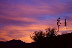 Yuccas welcome the new day  {Explored} (jimsc) Tags: skycolors morning ngc autumn fall november arizona pima pimacounty tucson catalina yucca pentax k50 jimsc dawn skyscape sunup pink sunrise
