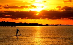 Paddle boarding into the sunset / Florida (msimpson5) Tags: paddleboard florida evening nature sun sky water ocean beach sunset