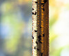 Stick It to the Flies Tube (Orbmiser) Tags: olympusm40150mmf4056r 43rds em1 mirrorless omd olympus ore portland fly flies sticky strop tube