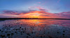 Panoramic sunset over Belhaven Bay (MilesGrayPhotography (AnimalsBeforeHumans)) Tags: 1635 fe1635mm sonyfe1635mmf4zaoss autumn a7ii belhavenbay belhaven eastlothian britain bridge dusk europe evening bridgetonowhere fe f4 glow iconic ilce7m2 landscape lens lothians nighfall outdoors oss ocean photography photo panorama panoramic pano ptgui tranquil reflections rocks river scotland scenic scottish scottishlandscapephotography sky skyline sunset sunlight sonya7ii sony sonyflickraward town twilight uk unitedkingdom village waterscape wide water bielwater zeiss za