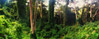ESTRIBO GALINDO (Ávila Extremo) Tags: warairarepano waraira waraiarepano elavila repano trekking orton cumbre summit parquenacional parque paisaje avila aire arbol senderismo selva verde flora hiking naturaleza naiguata venezuela cerroelavila cerroavila vegetacion bosque montaña mountain