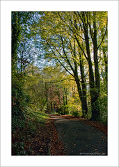 Woodland Path (prendergasttony) Tags: autumn lancashire nature elements nikon d7200 park garden leaf leaves tree path england sky uk green brown gold blue hall lee bank season seasonal fall colour color woods woodland redrose avenue walk roedeer greywagtail sparrowhawk goldcrest greatspottedwoodpecker tonyprendergast