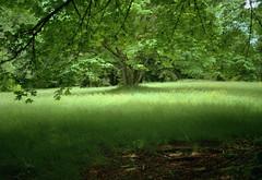 Burnaby Mountain Park (jvde) Tags: 3570mmf3345nikkor burnaby coolscan film gimp nikonfe fujicolor