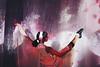 sakura swan ii (mitomeru) Tags: japan ballet dancer performance tokyo flower flowersbynaked pink portrait spontaneous