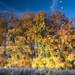Amsterdamse bos. Autumn colours... (PeteMartin) Tags: forestamsterdamsebostreesautumnwaterreflection amstelveeen netherlands nld
