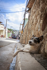 CUBA2017_101 (Dylon87) Tags: daytrip friends family memories vacation fun great gibara fishing town getaway bed breakfast travel holguin cuba dog stray road street curb side pose posing cute photo pic photographer photography teamcanon canon shotoncanon canoncanada