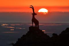 la cabra... i mès enllà, el Delta (manel pons) Tags: deltadelebre elsports manelpons portsdetortosabeseit lacabra lacabradelsports tardor otoño