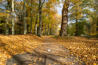 Golden bicycle path