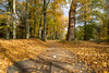 Golden bicycle path (Monika Kalczuga (on&off)) Tags: autumn golden goldenleaves leaves path bicyclepath forest park nature netherlands heiloo road tree trees trail wood woods
