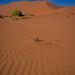 The dune before Deadvlei