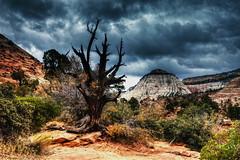 Zion (klauslang99) Tags: nature naturalworld northamerica national klauslang zion park mountains landscape