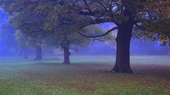 English Oaks and the Morning Mist (TERRY KEARNEY) Tags: englishoaktrees oaktree trees bushes grass grassland fields cheshirefields mist fog autumn canoneos1dmarkiv daylight day explore europe england ellesmereportcheshire flickr flowers kearney landscape nature oneterry outdoor parks terrykearney urban wildlife weather whitbypark 2017 park tree sky