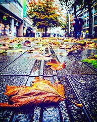 Wet autumn day (DrQ_Emilian) Tags: fall autumn season colors light details bokeh closeup macro leaves rain rainy wet weather outdoors mood urban urbanexploration city town stuttgart königstrase badenwürtemberg germany europe travel street streetphotography nikon nature