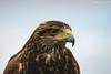 <3 (Lucía Martí Pastre) Tags: aeropuerto airport plane avión helicóptero aerofotofest2017 aerofotofest uruguay carrasco águila cetrería ave pájaro rapaz