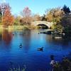 Central Park, New York, this time two years ago. (sarahgraham7) Tags: iphone instagram fall thanksgiving autumn centralpark usa america newyorkcity nyc newyork