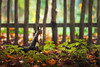Explorer (Pásztor András) Tags: nature squriell forest trees fence ground wild cute leafs dof blur background green yellow red tree dslr nikon d700 hungary andras pasztor photography 2017