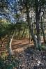 through the trees (Beale.UK) Tags: suttonpark suttoncoldfield parks outdoors landscape landscapes bealeuk
