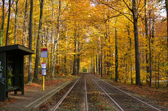 Tram through the forest (gavin.mccrory) Tags: tram travel transport scenic orange yellow autumn autumnal fall belgium forest trees wood leaves nikon dslr road tree railroad