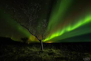 Half tree, half light