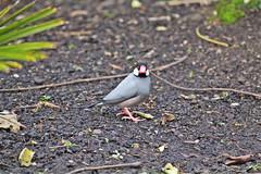 IMG_0858 (jaybluejeans94) Tags: animal animals nature chester zoo chesterzoo bird birds